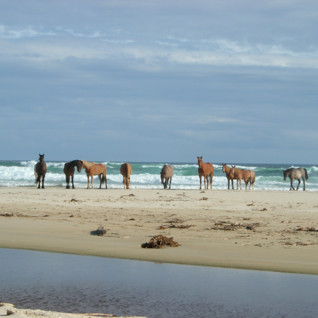 Horses at Oyster Bay Lodge, luxury hotel in South Africa
