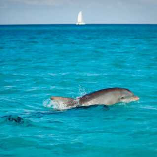 Picture of Dolphin in Bimini