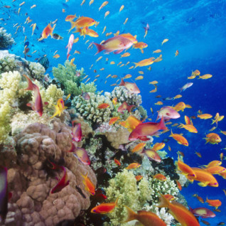 Picture of coral reef Southern Red Sea near Safaga Egypt
