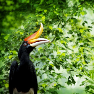 Bright Bird in the Verdant Malaysian Jungle