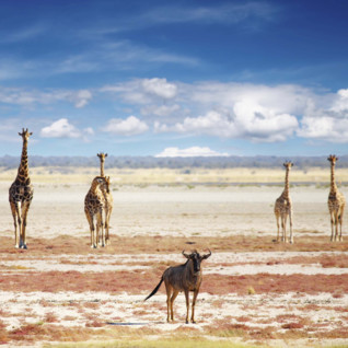 Nambian wildlife