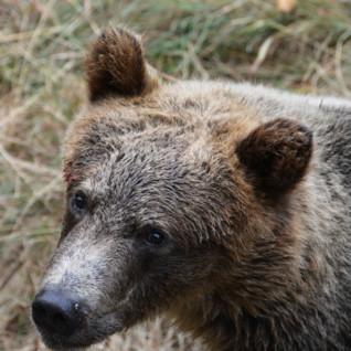 Bear at Knight Inlet Lodge