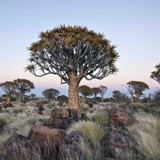 landscape in Botswana at dawn