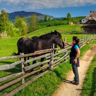 Horse Farm, Transylvania