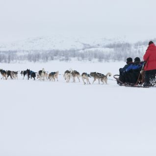 Family Dog Sled, Swedish Lapland