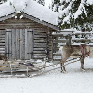 Reindeer, Finland