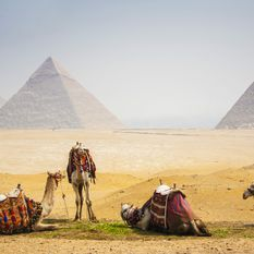 Camels by the Egyptian Pyramids