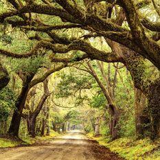 Deep South oak lined road