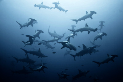 diving-sharks-lombok