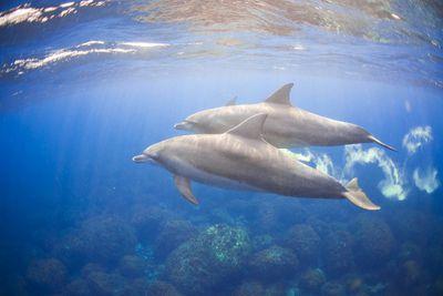 Dolphin Spotting in Hawaii