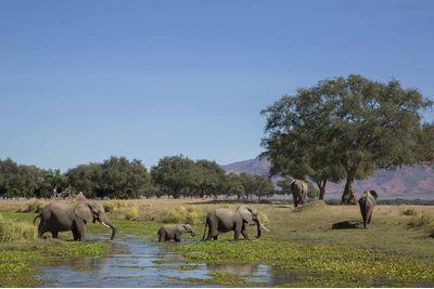 A canoe safari with elephants in Mana Pools, Zimbabwe