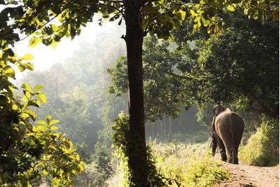 elephant riding in Chiang Mai