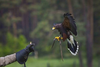 An image of a falconry display