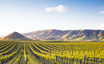 A Napa Valley Vineyard