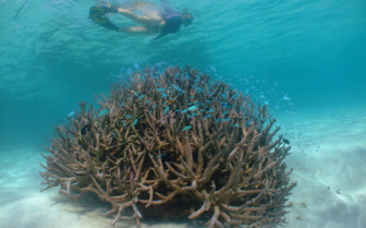 Picture of snorkelling on Ningaloo Reef