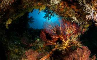 Picture of beautiful corals in New Britain