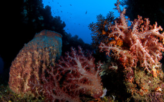 Picture of corals in New Britain