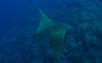 Picture of Ray in the Azores