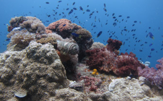 Picture of corals finding life around heavy machinery Chuuk Lagoon
