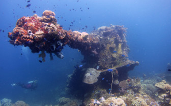 Picture of corals mixing with a wreck in Chuuk Lagoon