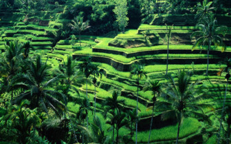 Picture of Aerial view of Bali forest