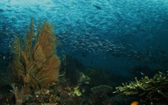 Picture of diving in Raja Ampat