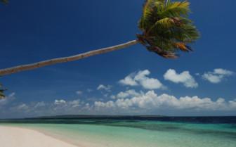 Picture of palm tree on beach at Wakatobi