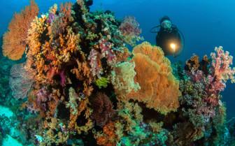 Picture of Diving at Wakatobi