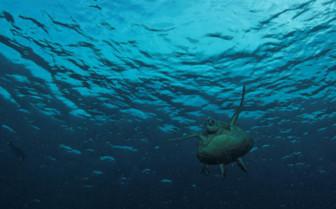 Picture of Turtle Sipadan island