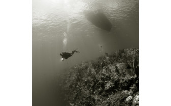Picture of Bloody Bay Wall in Little Cayman