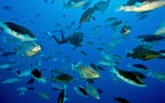 Picture of Nassau Groupers New Providence