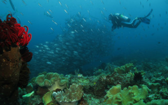 Picture of Fish and coral Raja Ampat