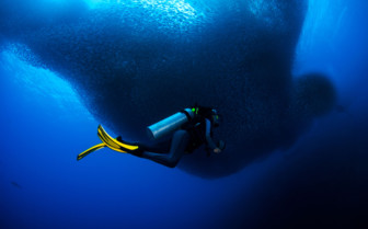Picture of diving in Moalboal