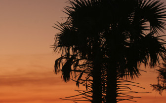 Picture of a palm tree at sunset