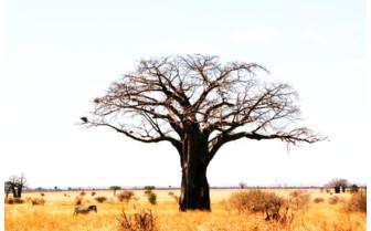 Picture of Tanzania landscape