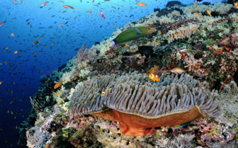 Picture of diving in the Andaman Islands