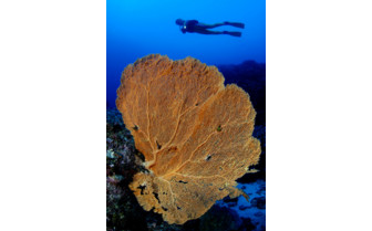 Picture of coral in Mauritius