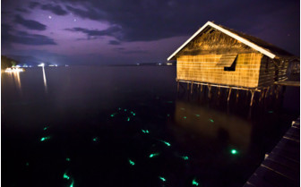 Picture of glow worms mating off jetty