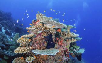 Fish Crowding Around Colourful Coral In The Maldives