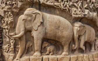 Elephant detailing