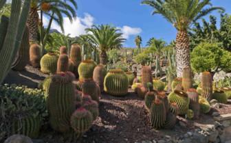 Cacti in Gran Canaria