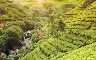 Tea Plantations of Sri Lanka