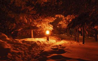 Lapland Path at Night