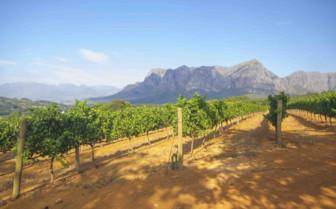 Bright day of vineyards