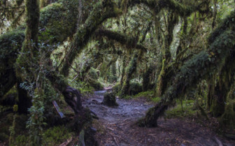 Forest Along the Carretera Austral