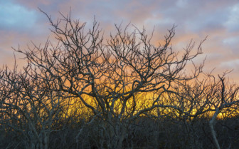 Twisted Tress at Sunset