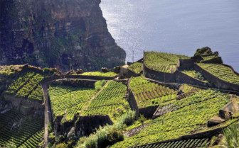 Hillside of Madeira