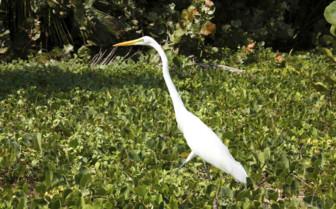 Stork in the Shrubs
