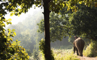 An Elephant Wandering through the Forest