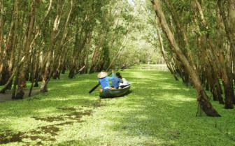 Tropical Boat Trip in Mekong Delta